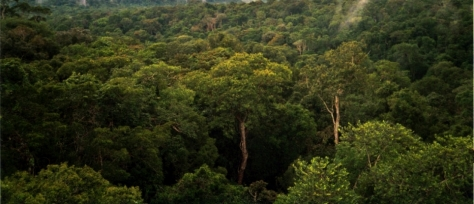 Amazon_Manaus_forest